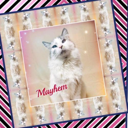 Mayhemie